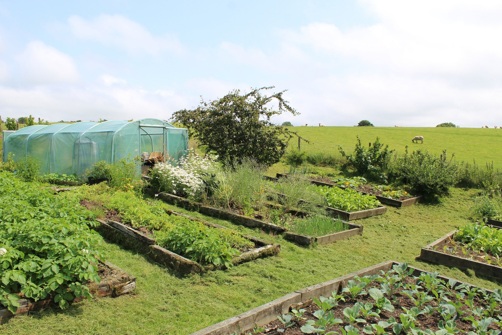 Permaculture in Africa, a sustainable way to grow