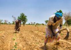 5 million people in the Sahel are suffering from severe hunger
