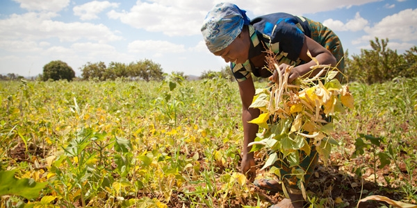 The Open Data Revolution to Achieve Zero Hunger